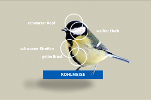nabu-schaumalwerdafliegt-grafikanimation